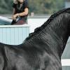 Ген за черен цвят при конете