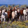 Често срещани заболявания при конете – съветите на д-р. Миладинов