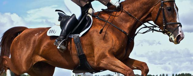 Правилният ъгъл на коленете по време на скок в конния спорт