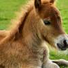 Понита – накратко за малките коне наречени Пони