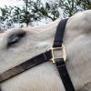Как конете използват жестове