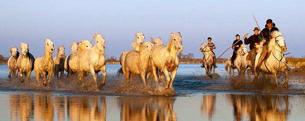 Порода коне Камарг (Camargue)