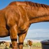 Как да стимулираме жаждата на коня