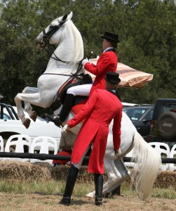 South_African_Lipizzaners-001