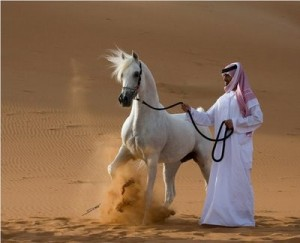 arabian-horse2