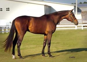 ata-stallion-tatendrangforweb