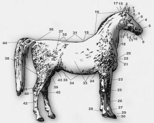 ezda-horse-body