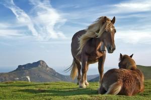 horses_1604_1920x1200