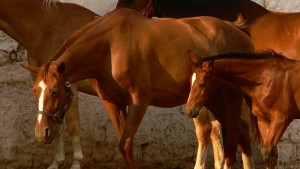 kabiyuk-horses-resized