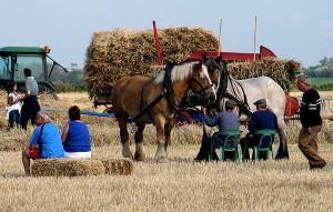 работен ден на конете
