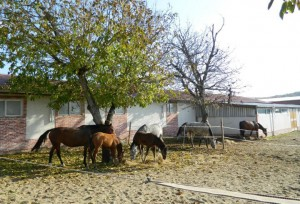 konna-baza-riben-kone
