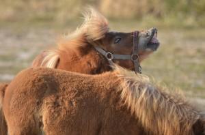 жестовете на конете