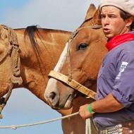 аржентински креолски кон