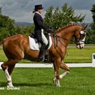 хармония с коня в обездката