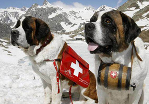 спасителни кучета