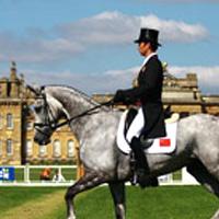 конна езда - обездка