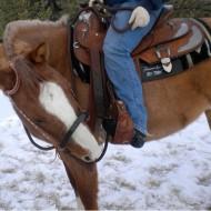 аварийно спиране на коня