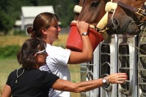 хранене на коне с фураж