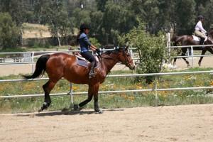 тренировка на коне