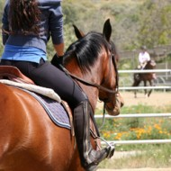 Лесна тренировка на коне