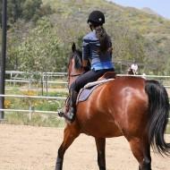 Лесна тренировка за коне