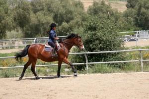 Лесна тренировка на кон