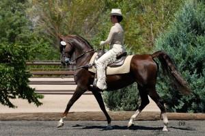уестърн обездка на коне