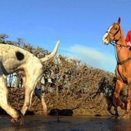 Лов с коне - Парфорсен лов