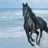 Цвят на косъма на конете