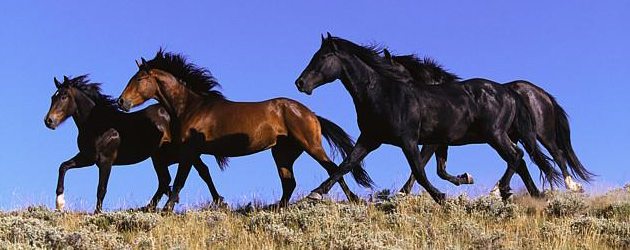История на коня