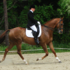 Aнглийски кон (Thoroughbred)