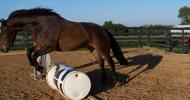 Natural Horsemanship: My Immortal