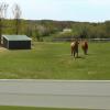 Групов тренинг на коне
