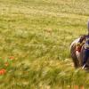 Parelli Natural Horsemanship – Ron & Kiowa