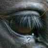 Психологията на конете –Част 2