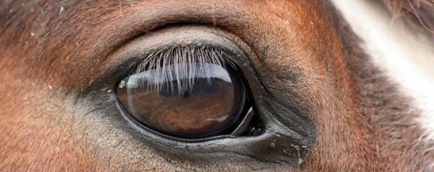 Психологията на конете –Част 3