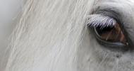 Психологията на конете –Част 4