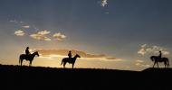 Английска и Уестърн езда