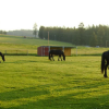 Донски кон (Don Horse)