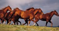 Факти за конете