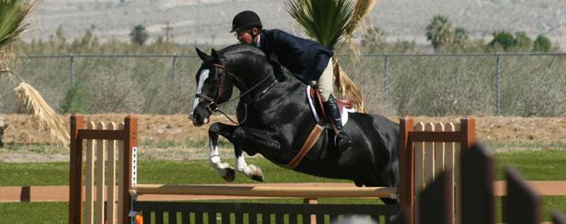 Хановерски кон (Hanoverian)