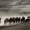 Българите сме забравили за връзката между човека и коня