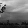 Камчийски кон