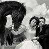 Мъжете, жените и конете