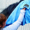 Как да изсушим кон