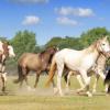 Един българин в Испания мечтае за коне!