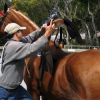 Как да оседлаем своя кон?