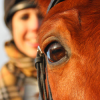 Какво виждат конете?