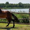 Трите случая, когато трябва да накажем нашия кон
