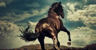 Тренировъчна скала на коня – Част 2